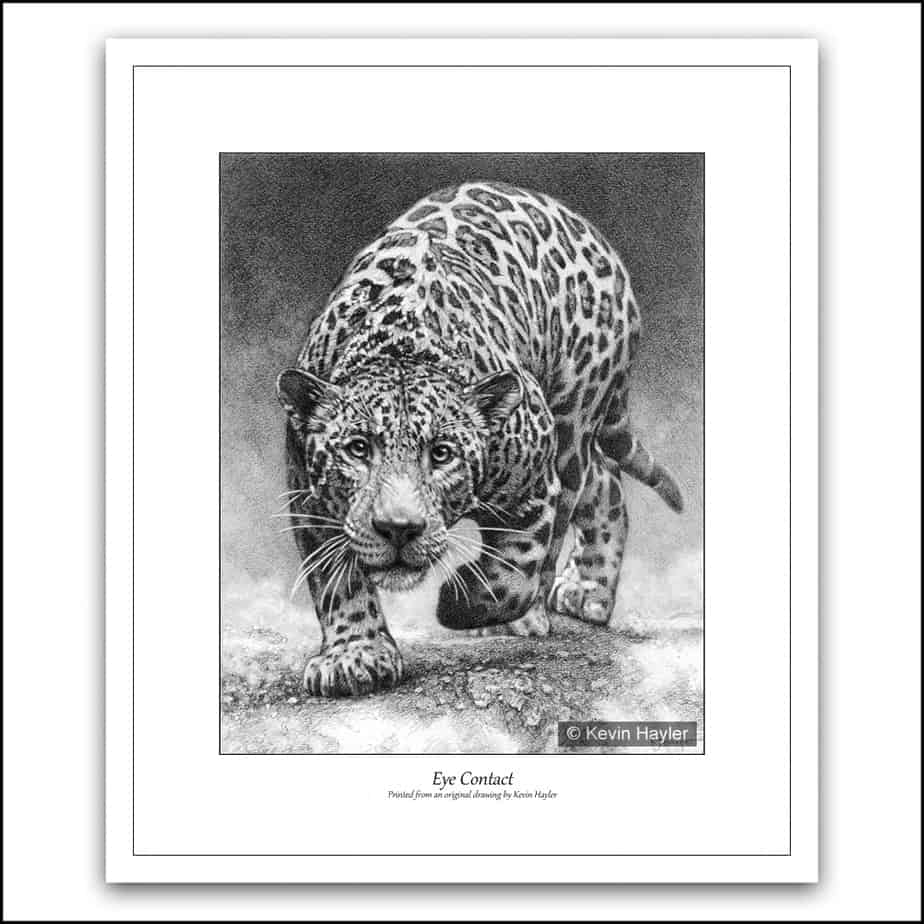 prowling jaguar about to attack pencil drawing