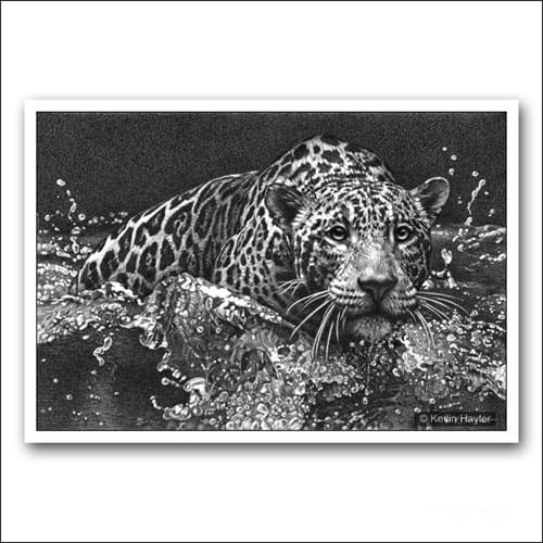 jaguar leaping into water pencil drawing