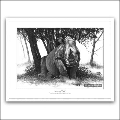 White rhino rising under a tree in African bush pencil drawing