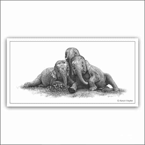 Three pygmy elephants playing limited edition pencil drawing
