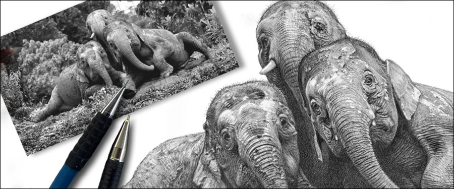 How do wildlife artists make a living? Elephant drawing by kevin Hayler