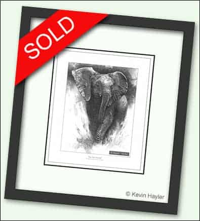 Framed elephant drawing with a sold sticker for selling art category.