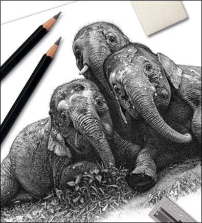 Drawing tips category. An elephant drawing and pencils for pencil wildlife art tutorials